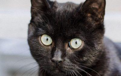 Com funciona l'adopció de gat a Geligats?