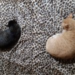 Lilo i Garfield