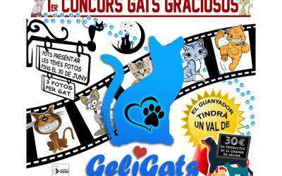 1r Concurs Gats Graciosos